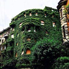 Uno sguardo ad un po' di verde che copre le case. Foto di Mila Boneschi #milanodavedere Milano da Vedere