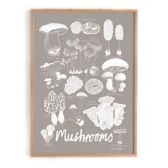 urban-garden-company-Lisa-grue-we-love-nature-mushrooms-1.png 1.000 ×1.000 pixels