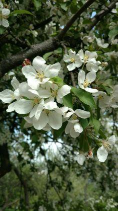 Гарні квіти в ботанічному саду