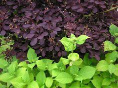 That Bloomin' Garden: Fertilizer Friday- Colour & Contrast