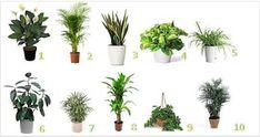 Ci sono una grande varietà di piante che fanno bene alla salute. Alcune di esse sono poco conosciute, ma esse risultano essere delle grandi alleate per il