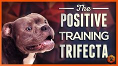 Simpawtico Dog Training Teach Your Dog to Listen - the Positive Training Trifecta! Puppy Training Tips, Dog Training Videos, Operant Conditioning, Best Primer, Blog Entry, Chemistry, Psychology, Positivity, Social Media