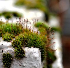 Moss, crop 66% by madamasu, via Flickr