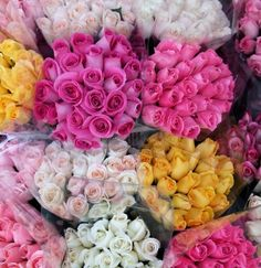 Which Rose Color Should You Choose? Find out the Meanings Here Seasonal Flowers, Fresh Flowers, White Flowers, White Roses, Beautiful Gardens, Beautiful Flowers, Rose Color Meanings, June Flower, Types Of Roses