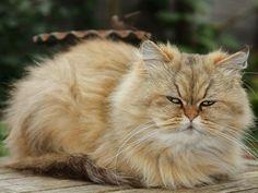 """""""Mia"""" war 2012 der viertbeliebteste Katzenname    www.einfachtierisch.de"""