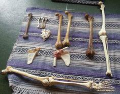 Anatomy and Yoga: The Bones Know