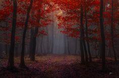 -Lost red story- by Janek-Sedlar.deviantart.com on @deviantART
