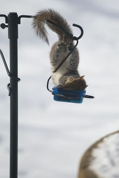 .This bird feeder looks like a great place for a nap | squirrel.