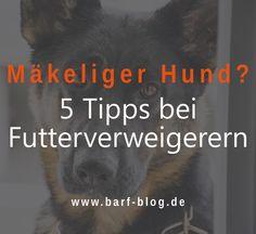 Dein #Hund frisst schlecht und verweigert immer wieder das Futter? Es gibt einiges, was Du tun kannst, damit Dein Mäkler zu einem besseren Fresser wird.  http://barf-blog.de/futterverweigerung-barf/