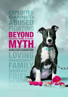 Beyond the Myth........Unfairly known as violent killers, pit bulls have suffered from the stigma of negative media coverage that has lead to citywide bans across the country. This documentary strips away the preconceptions to show the loving companions these dogs can be.