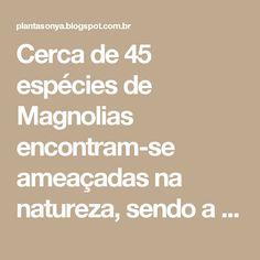 Cerca de 45 espécies de Magnolias encontram-se ameaçadas na natureza, sendo a maioria delas de espécies tropicais.