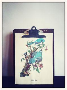 Using clipboards to display vintage botanical prints