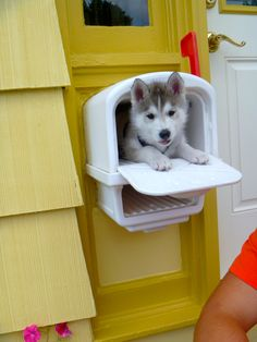 You got mail!! #Siberian #Husky (Unless it's a check for a few million, this is the only mail I ever want to get.)