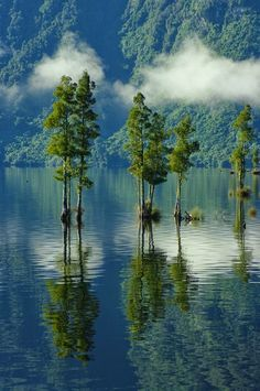 Mitchells Lake, Brunner, West Coast New Zealand, Amazing Reflection.. (Northwest of the South Island)