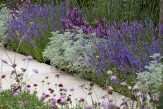 Instead, favour shrubs, tidy conifers, ornamental grasses and tough-but-colourful mat-forming perennials such as Stachys Byzantina 'Silver Carpet'. All need little attention once established and suffer few pests or diseases. Cottage Patio, Cottage Garden Borders, Cottage Garden Plants, Blue Garden, Colorful Garden, Autumn Garden, Shade Garden, Small Garden Borders, Shrubs For Borders