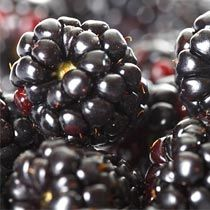 Can Pregnant Women Eat Blackberries?
