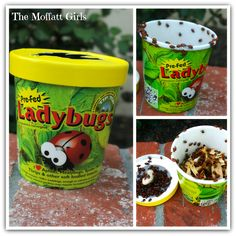 SO FUN!!  Release 1,500 ladybugs for some simple science discoveries!  Kids LOVE it!!