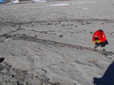 Scoperta foresta fossile in Antartide da ricercatori Università di Siena
