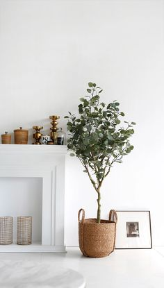 Eucalyptus Artificial Foliage Plant,Artificial Eucalyptus Topiary Tree For Home . - Eucalyptus Artificial Foliage Plant,Artificial Eucalyptus Topiary Tree For Home Hotel Decor – Buy - Artificial Plants Indoor, Decor Buy, Home, House Plants Indoor, Plant Decor, Trees To Plant, Hotel Decor, House Plants Decor, Fake Plants
