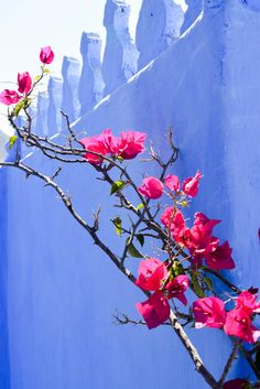 Beautiful Shot - Must See: Chefchaouen, Morocco | Free People Blog #freepeople