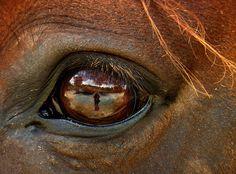 macro -- horse's eye
