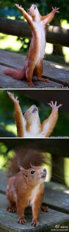 GOD!NUTS! NUTS! NUTS!