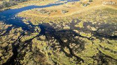 Photo aérienne du delta de l'Okavango