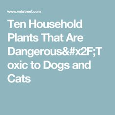 Ten Household Plants That Are Dangerous/Toxic to Dogs and Cats