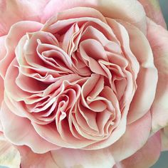 All Flowers, Clay Creations, Deco, Rose, Plants, Pink, Deko, Roses, Dekoration
