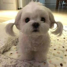 Little girl Little girl<br> More memes, funny videos and pics on Cute Baby Dogs, Cute Little Puppies, Cute Dogs And Puppies, Cute Little Animals, Cute Funny Animals, Cute Babies, Puppies Tips, Cutest Dogs, Funny Animal Photos