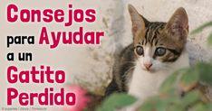Si llega a encontrar un gatito Huérfano, asegúrese de mantenerlo calientito y seguro en una caja, y busque una madre que esté dispuesta a alimentar otra boca adicional. http://mascotas.mercola.com/sitios/mascotas/archivo/2014/12/04/cuidado-de-un-gato-huerfano.aspx