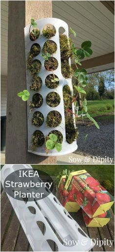 Repurposed IKEA Shopping Bag Holder Strawberry Planter