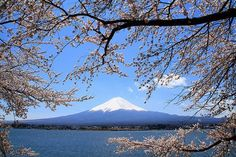 Mt Fuji: The famous symbol of Japan, a sacred mountain and an active volcano. Mount Fuji is the highest mountain in Japan with a beautifully symmetrical volcanic cone , which is snow-capped