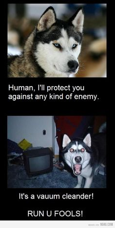 The dog's only natural enemy....a vacuum