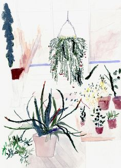 Potted Garden | Alicia Galer