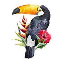 """Résultat de recherche d'images pour """"dessin toucan fleurs exotiques"""""""