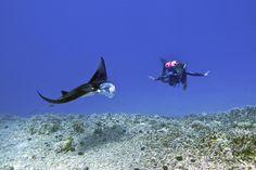 Scuba dive Hawaii