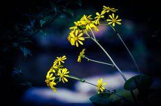 Flower  Shadow Beautiful  Light  Yellow  Colors