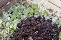 Istutusten ja nurmikon rajaus - Kotipuutarha Plants, Plant, Planets