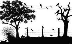 Love the Silhouette of birds on the wire