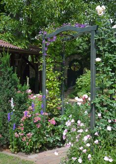 Wood trellis for clematis and rose. Look at the beautiful english green colour of the trellis