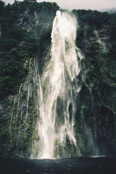 touchdisky: New Zealand bychasquito el roncoso