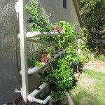 Gardening using PVC pipes