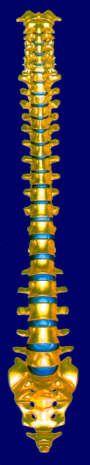 Schwindel bei Beschwerden der Halswirbelsäule - Vorbeugung - Entspannungsübungen