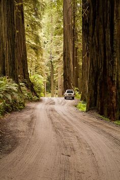 Visit the redwood forests in California