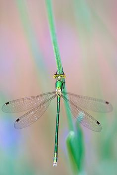 Don't know why, but I love dragonflies.