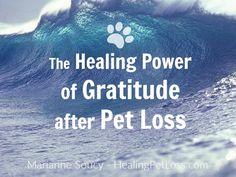 The Healing Power of GRATITUDE after Pet Loss (blog)  http://healingpetloss.com/the-healing-power-of-gratitude-after-pet-loss/ #petloss
