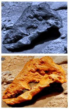 """""""This is a very interesting example of anomalies that the NASA rover passes by, rather than investigate. In this skull we notice there is upper teeth, and the teeth look the same a horse fossils here on Earth. I have to admit ArtAlienTV has a good..."""