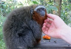 Ecuador Volunteer offers a variety of projects in education, conservation, sustainable tourism, and community development in the Amazon region. #Amazon #rainforest #volunteer #ecuador #abroad #BeTheChange #volunteerabroad #ecuadorvolunteer #travel