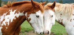 Dermatólogos niegan el milagro anticaída del champú para caballos ...